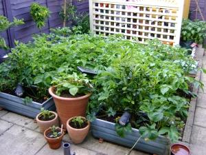 Grown Garden