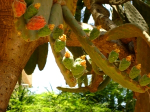 Cactus Tree & Fruit